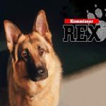 Rex, chien flic